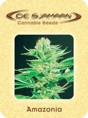 Amazonia cannabis single seeds