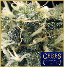 Fruity Thai