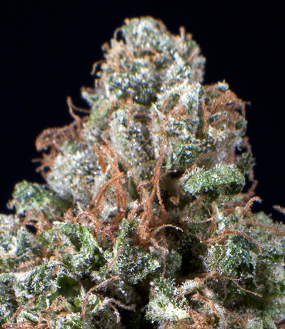 Cherry Pie Kush seeds