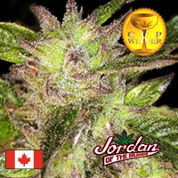 God Bud Ten Marijuana Seed Packs