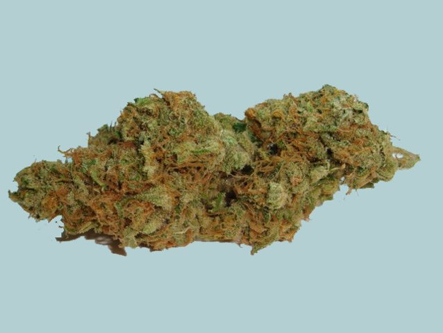 Hogs Breath marijuana seeds