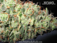 Kong single marijuana seeds