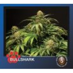 Bulldog Bullshark Feminised Cannabis Seeds