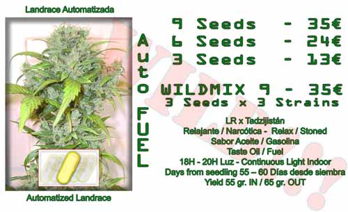 auto fuel cannabis seeds