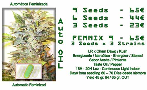 auto oil cannabis seeds