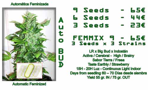 auto bud cannabis seeds