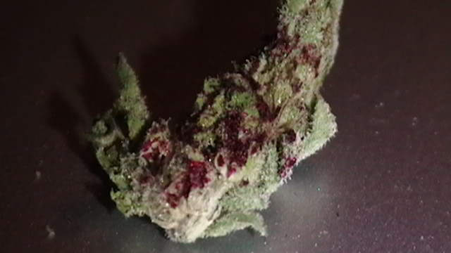 Cotton candy diesel marijuana seeds