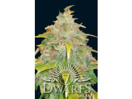 Trojan feminized marijuana seeds
