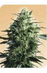 Mother`s Finest single seeds