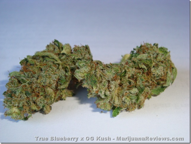 True Blueberry Og Kush marijuana seeds